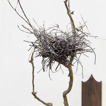 Blue Heron Nest