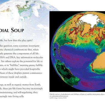 Panel 10: Primordial Soup