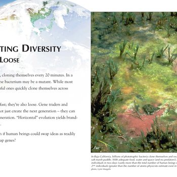 Panel 13: Celebrating Diversity: Fast And Loose